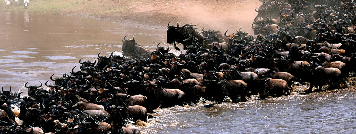 wildebeests-migration-safari-tanzania